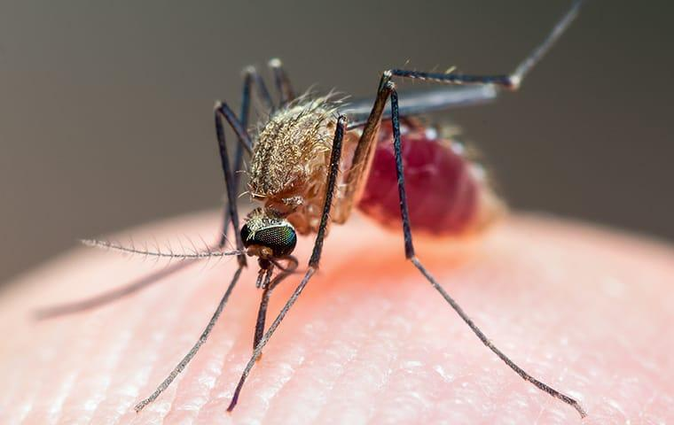 a mosquito biting a residents skin
