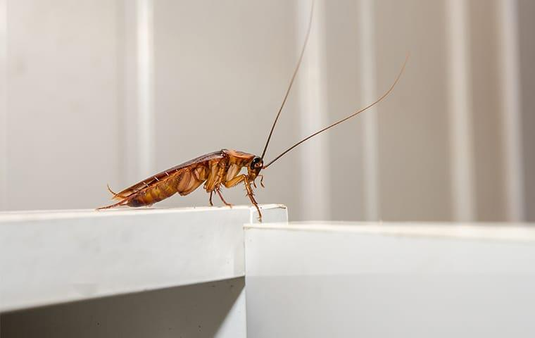 a cockroach on a kitchen counter in a home in memphis tennessee