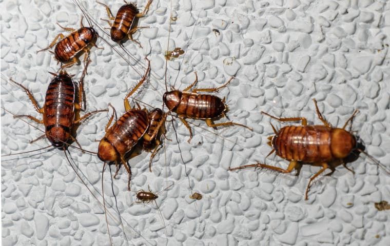 many cockroaches in a bathroom in a home in memphis tennessee