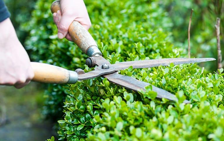 a technician trimming a hedge outside of a home in memphis tennessee