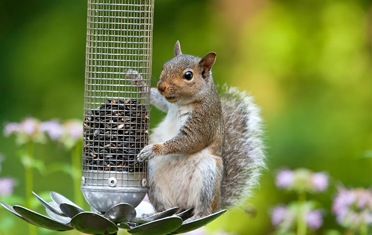 a squirrel hanging onto a bird feeder outside of a home in memphis tennessee